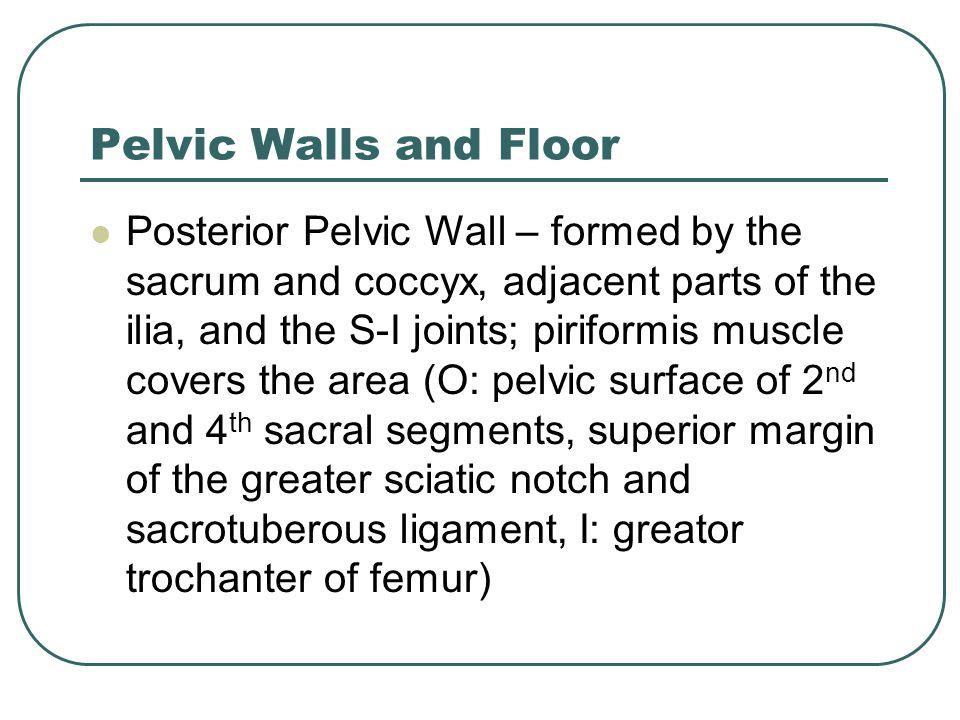 Pelvic Walls and Floor