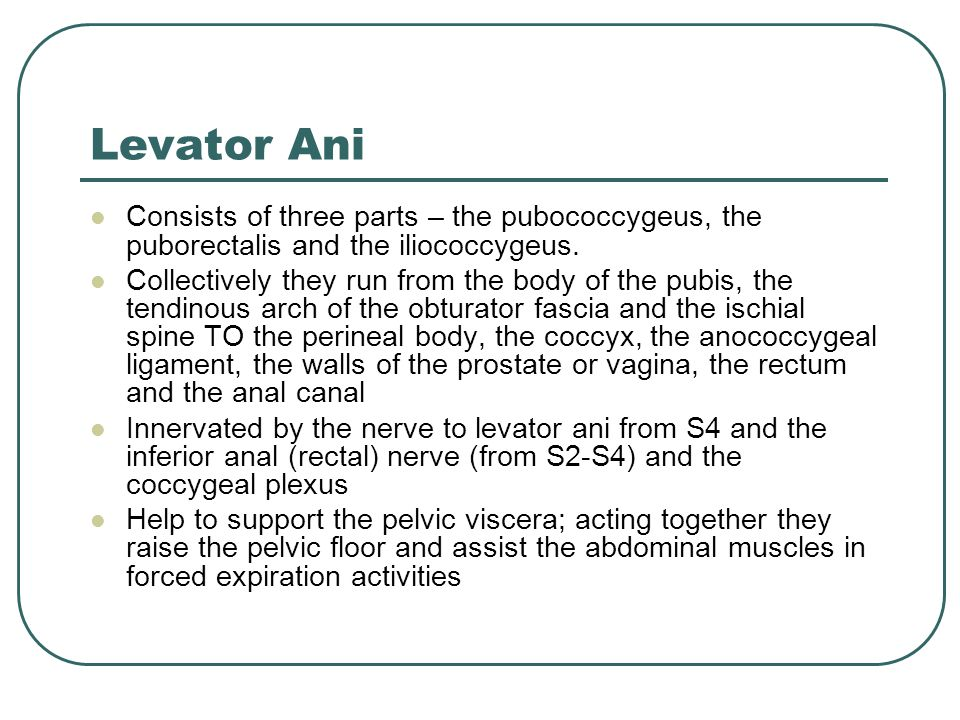 Levator Ani Consists of three parts – the pubococcygeus, the puborectalis and the iliococcygeus.