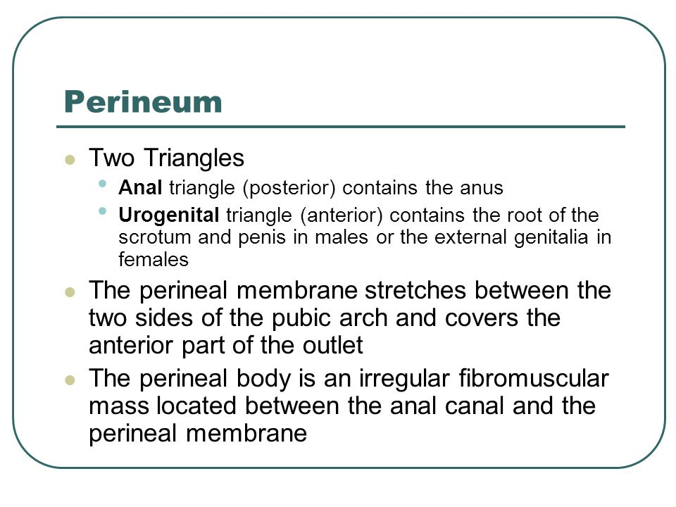 Perineum Two Triangles