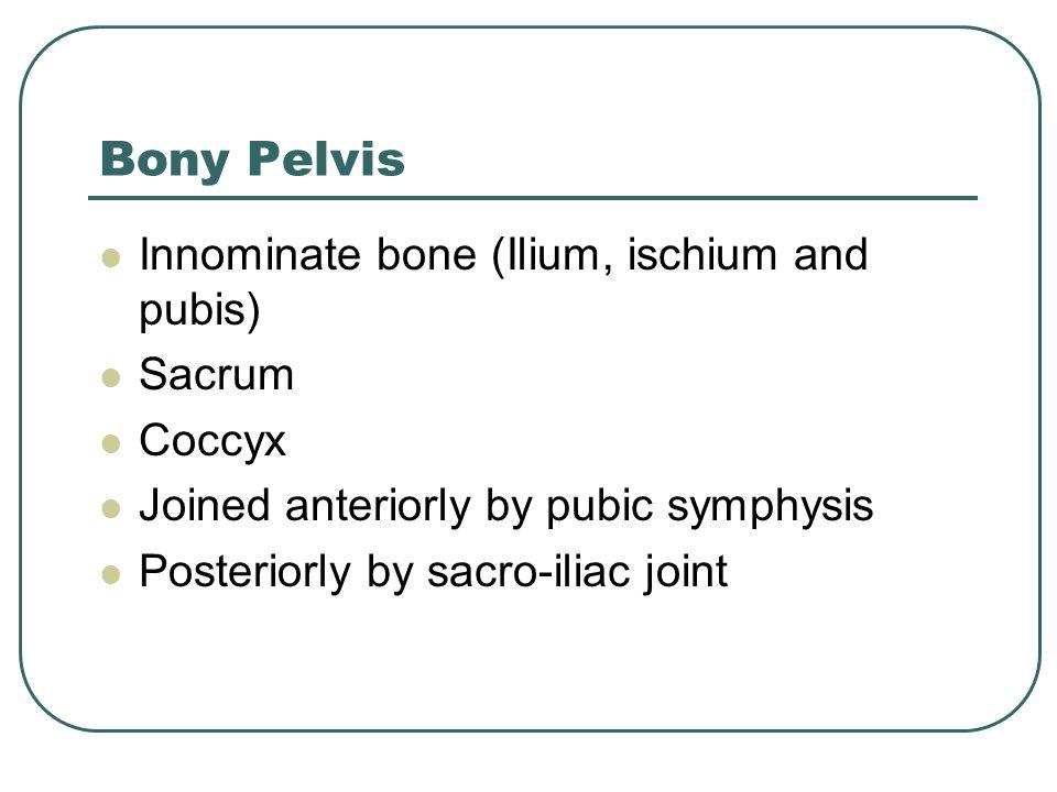 Bony Pelvis Innominate bone (Ilium, ischium and pubis) Sacrum Coccyx