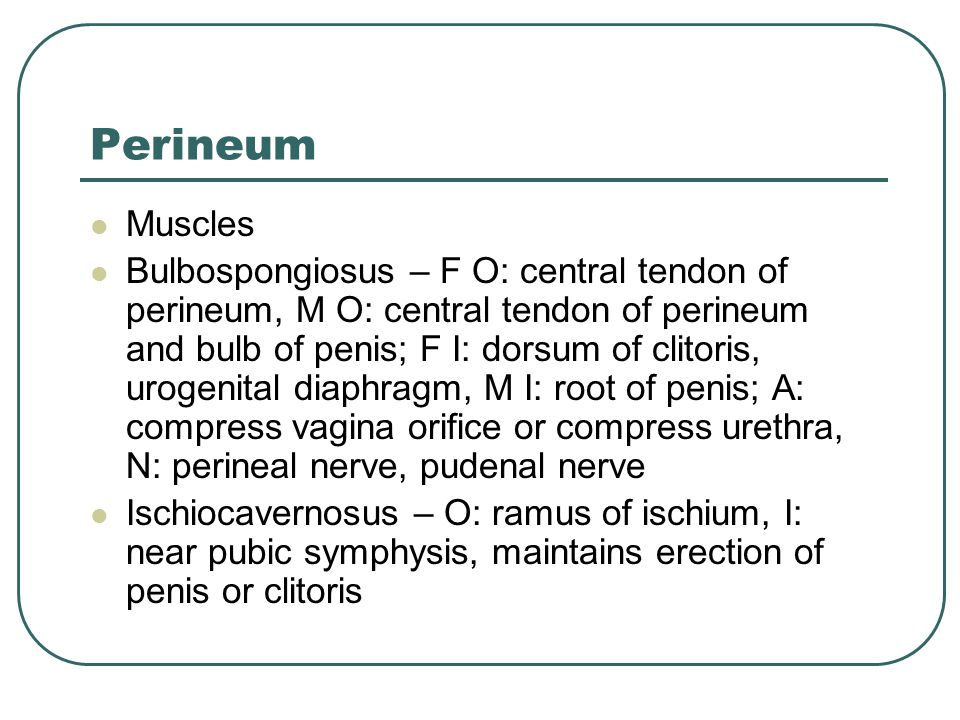 Perineum Muscles.