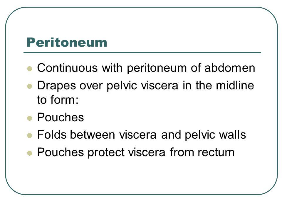 Peritoneum Continuous with peritoneum of abdomen