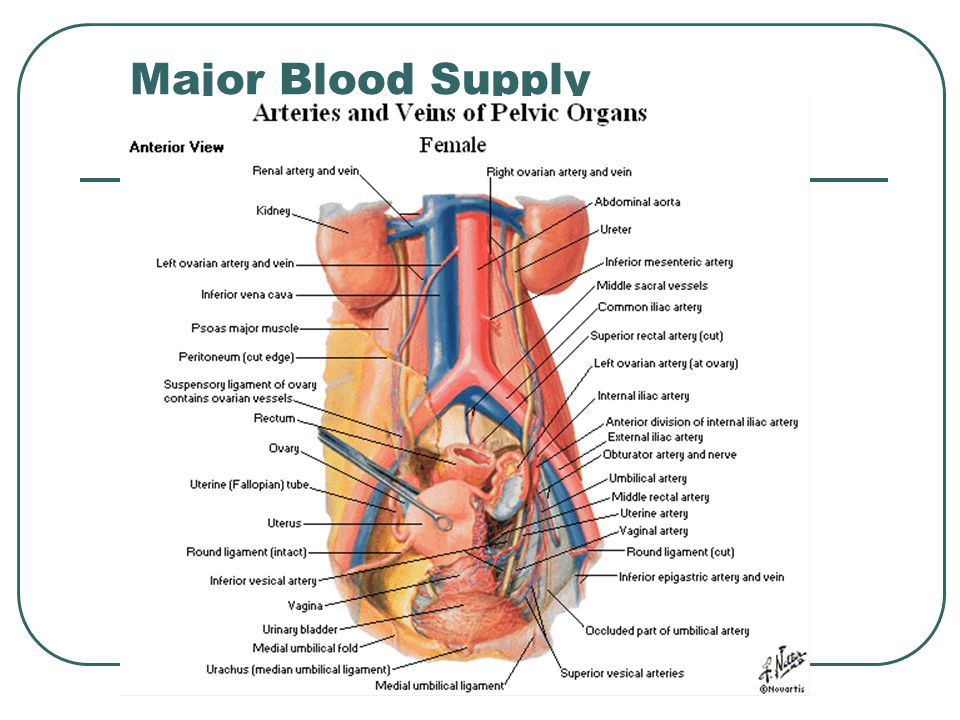 Major Blood Supply