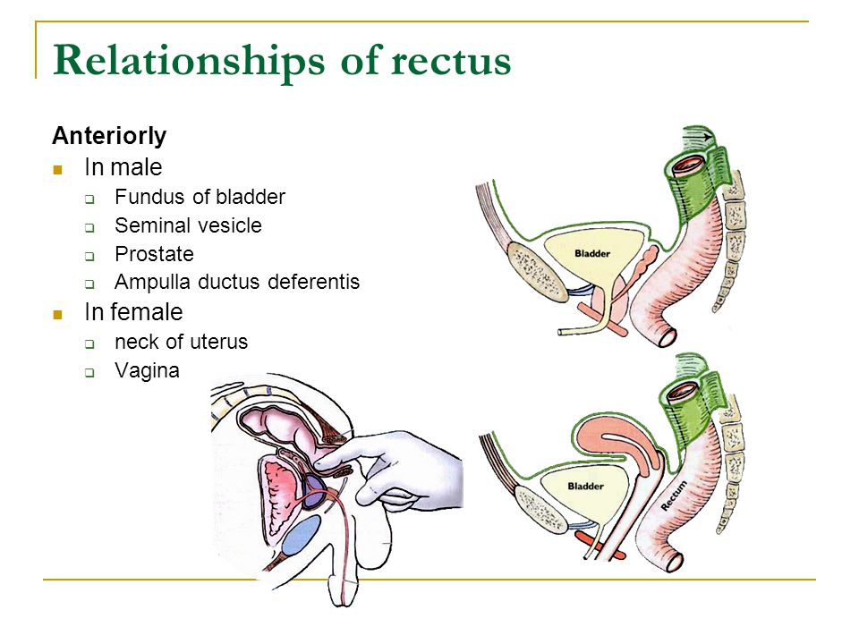 Relationships of rectus