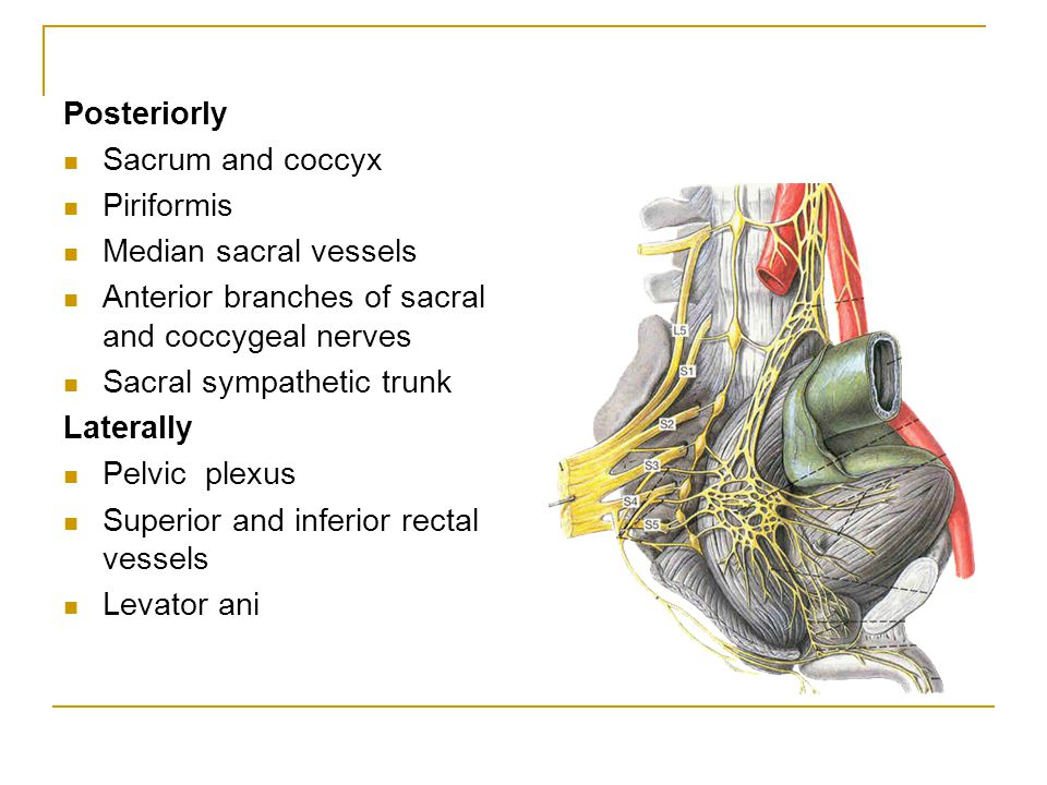 Posteriorly Sacrum and coccyx. Piriformis. Median sacral vessels. Anterior branches of sacral and coccygeal nerves.