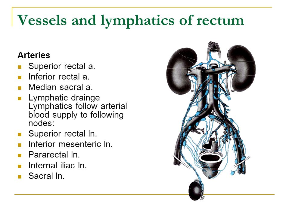 Vessels and lymphatics of rectum