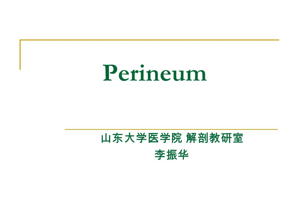 Perineum 山东大学医学院 解剖教研室 李振华