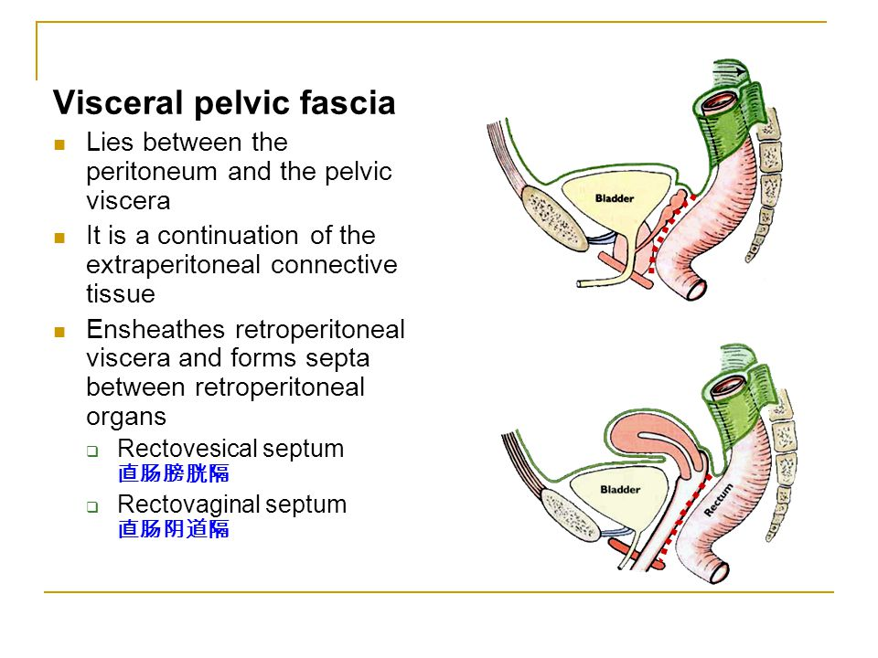 Visceral pelvic fascia