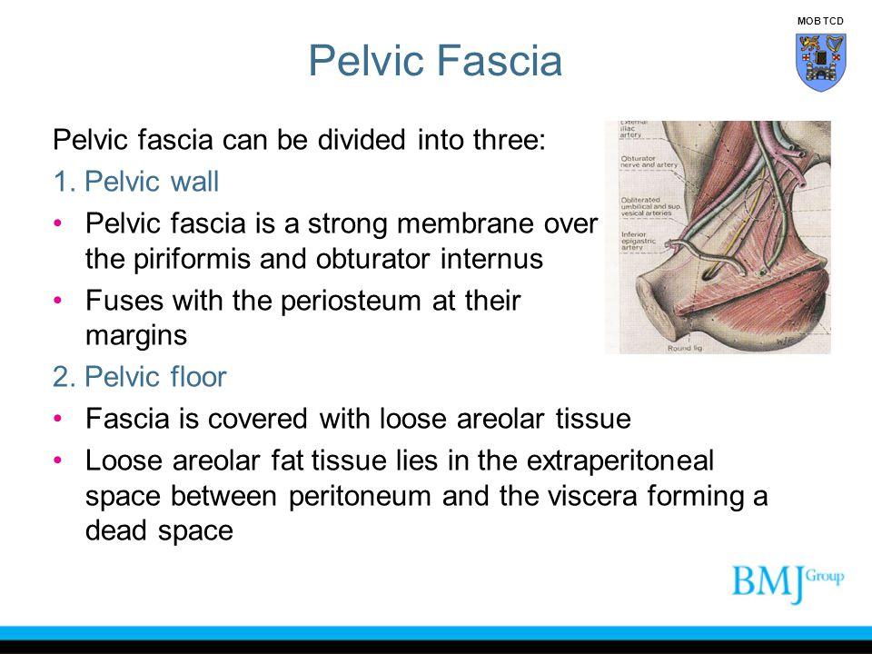 Pelvic Fascia Pelvic fascia can be divided into three: 1. Pelvic wall