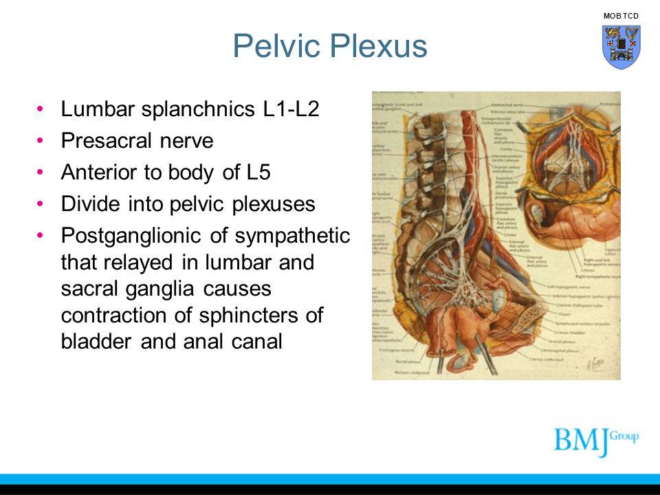 Pelvic Plexus Lumbar splanchnics L1-L2 Presacral nerve