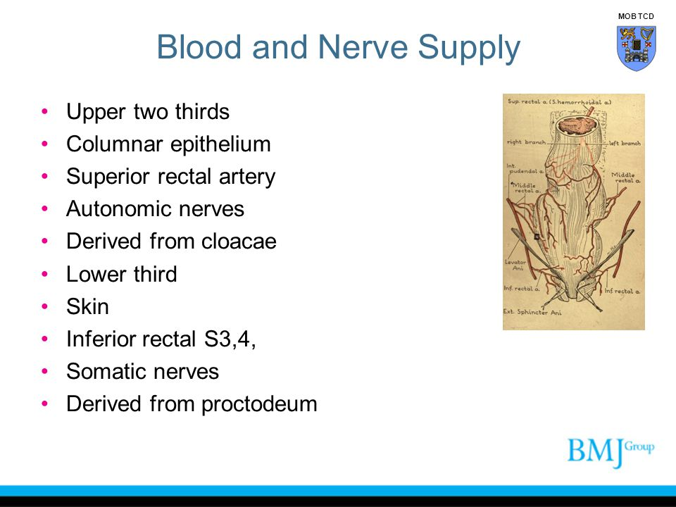 Blood and Nerve Supply Upper two thirds Columnar epithelium