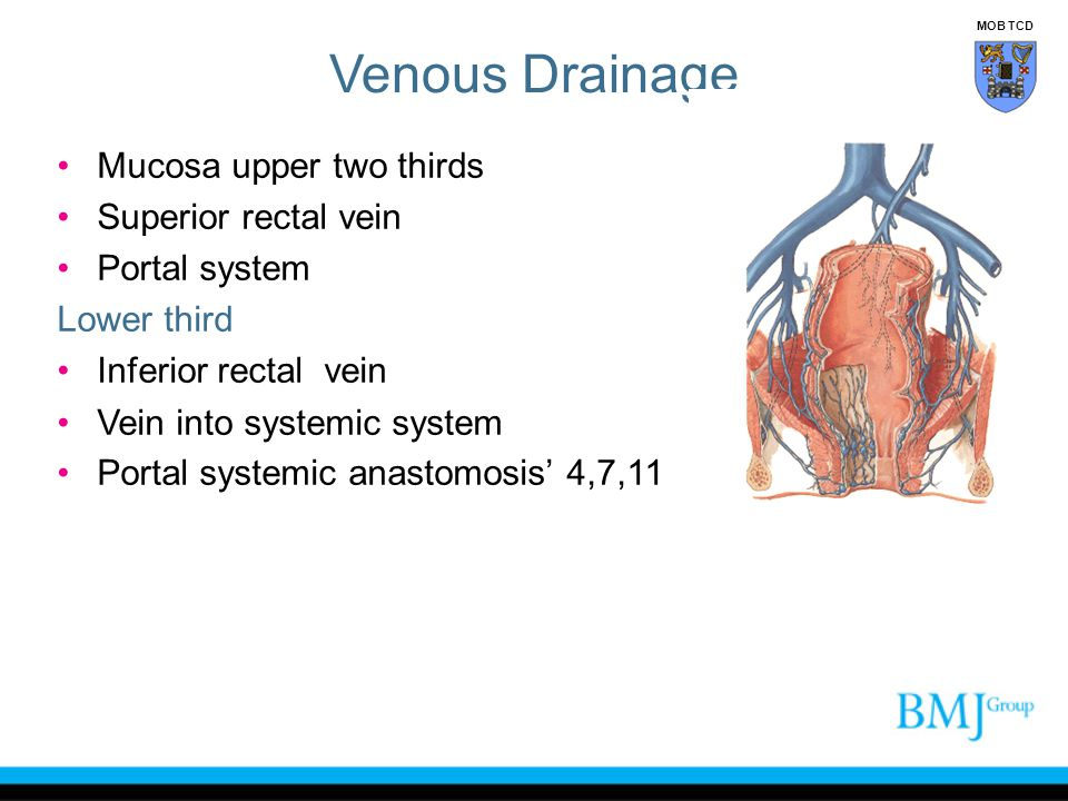 Venous Drainage Mucosa upper two thirds Superior rectal vein