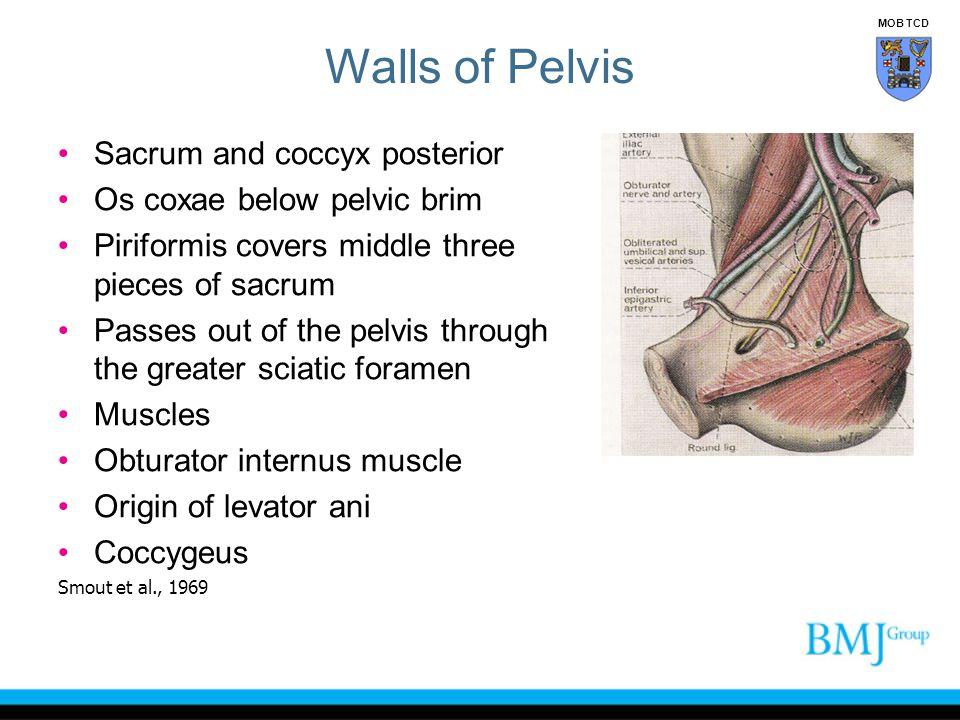 Walls of Pelvis Sacrum and coccyx posterior Os coxae below pelvic brim