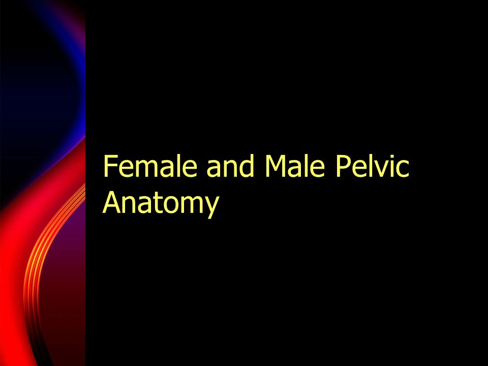 Female And Male Pelvic Anatomy Ppt Video Online Download