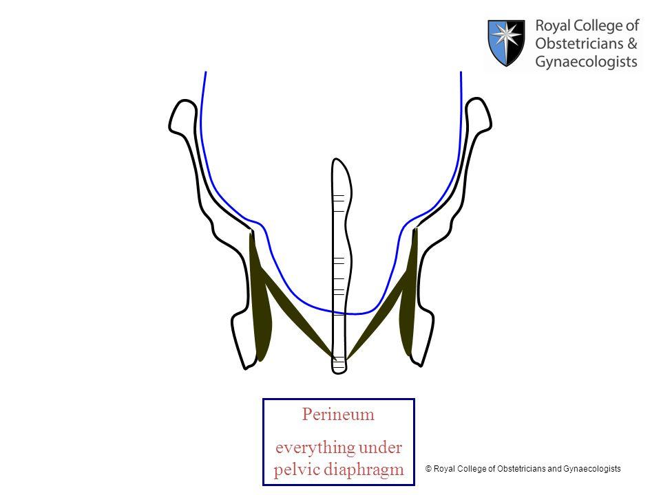 everything under pelvic diaphragm