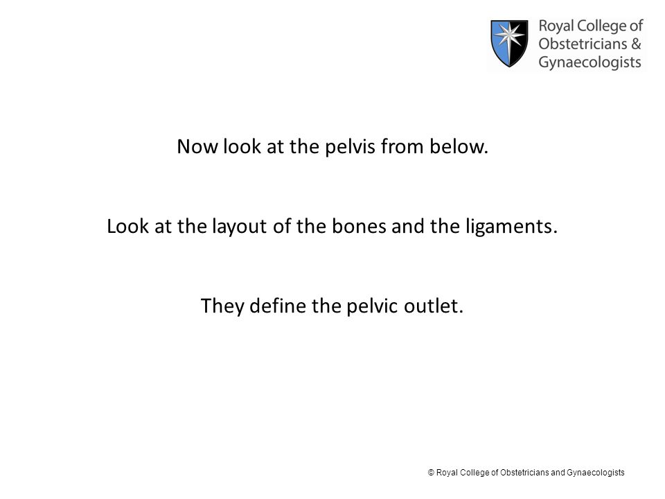 Now look at the pelvis from below.