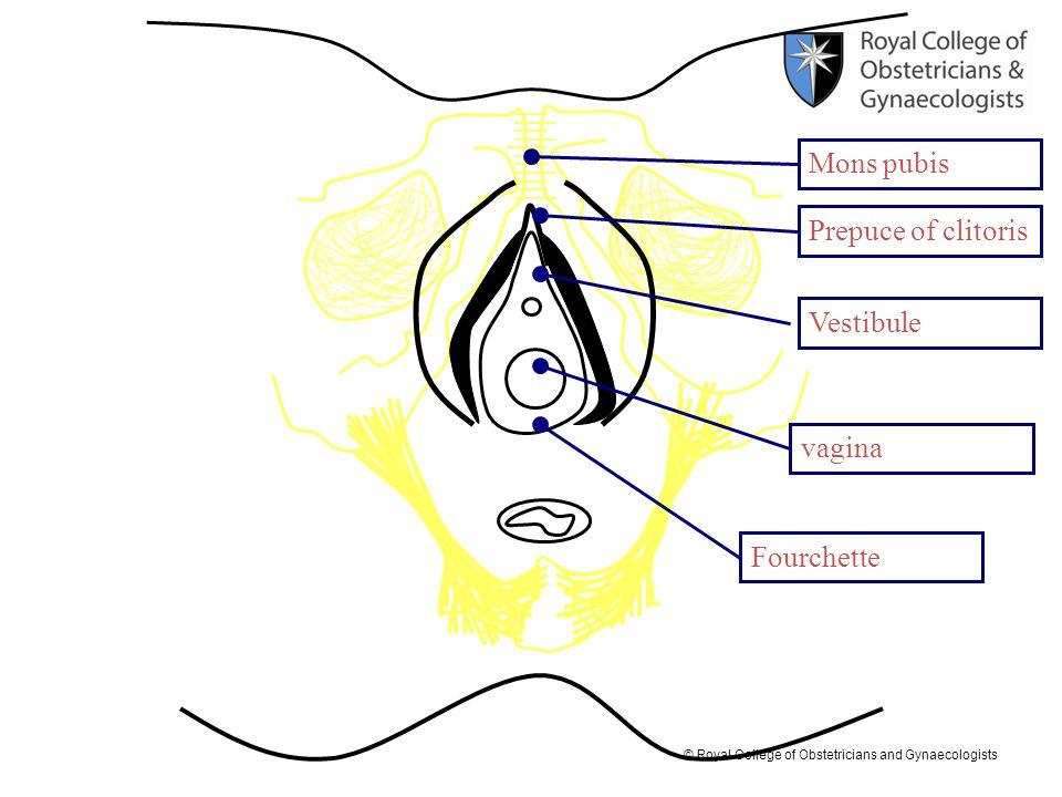 Mons pubis Prepuce of clitoris Vestibule vagina Fourchette