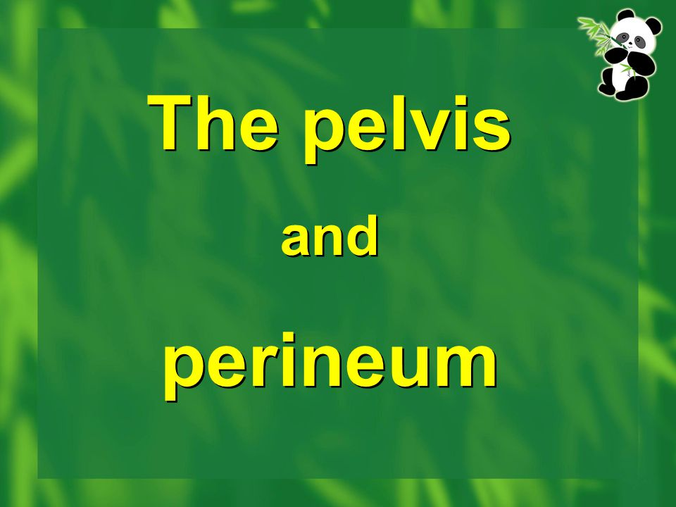 The pelvis and perineum