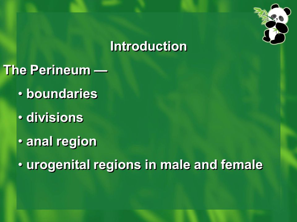 Introduction The Perineum — boundaries divisions anal region urogenital regions in male and female