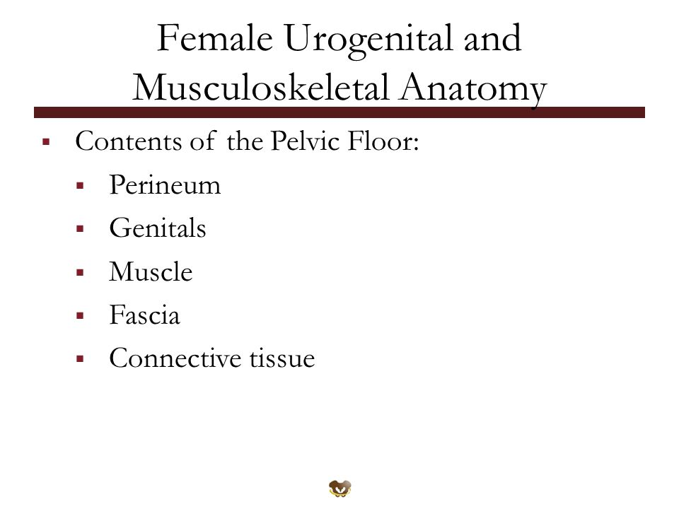 Female Urogenital and Musculoskeletal Anatomy