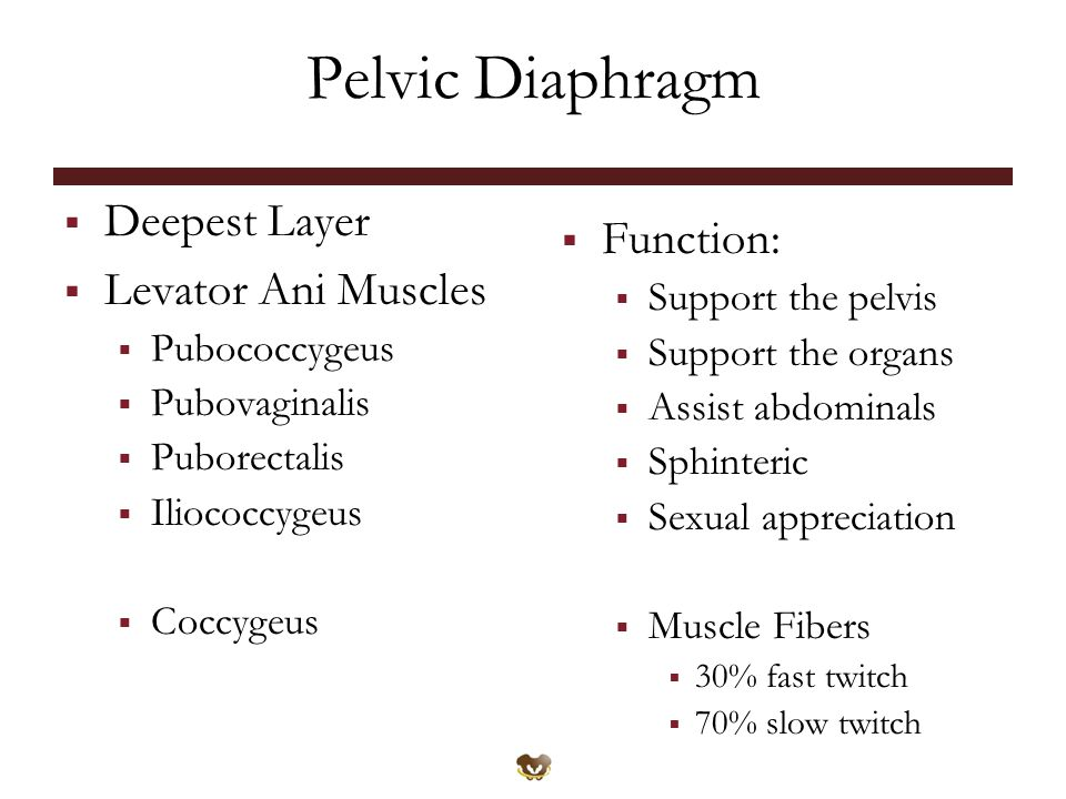 Pelvic Diaphragm Deepest Layer Function: Levator Ani Muscles