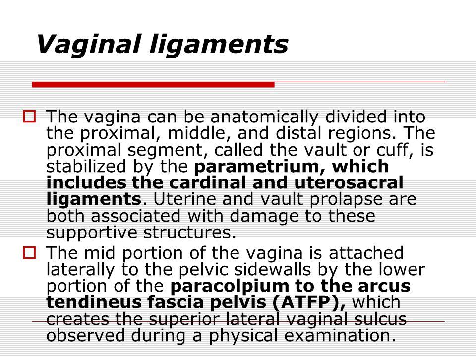 Vaginal ligaments