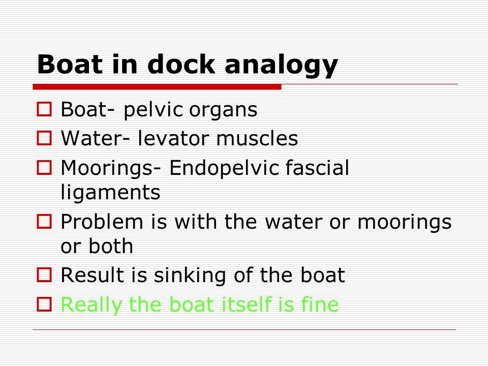 Boat in dock analogy Boat- pelvic organs Water- levator muscles