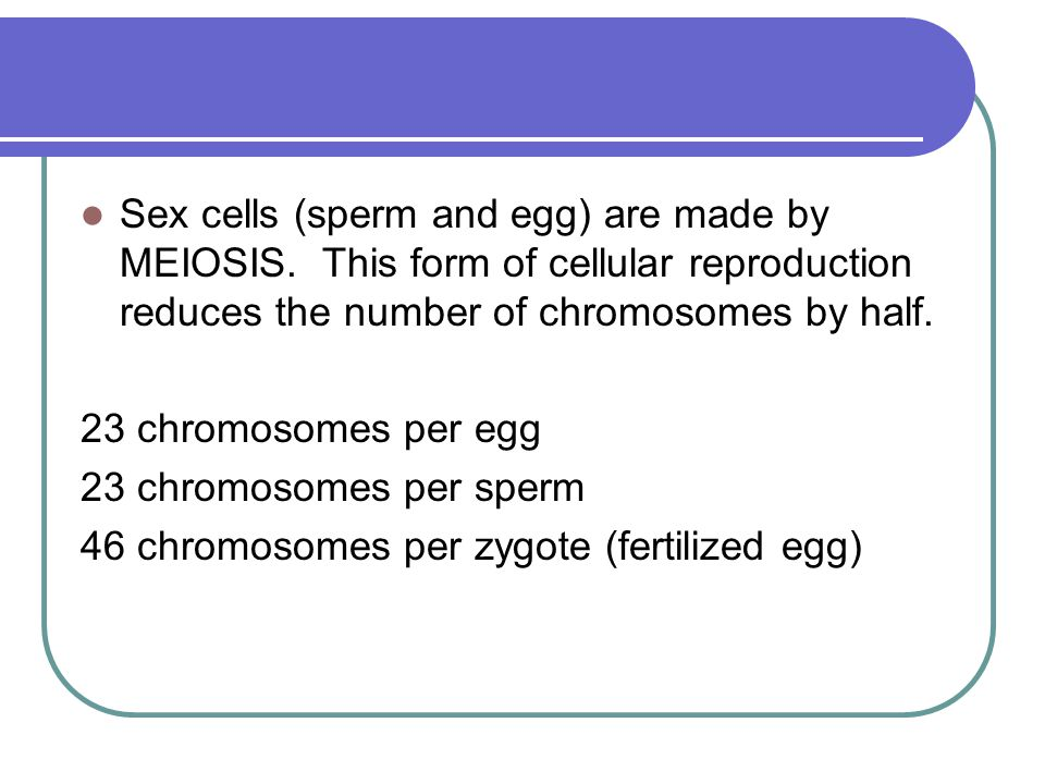 Sex cells (sperm and egg) are made by MEIOSIS