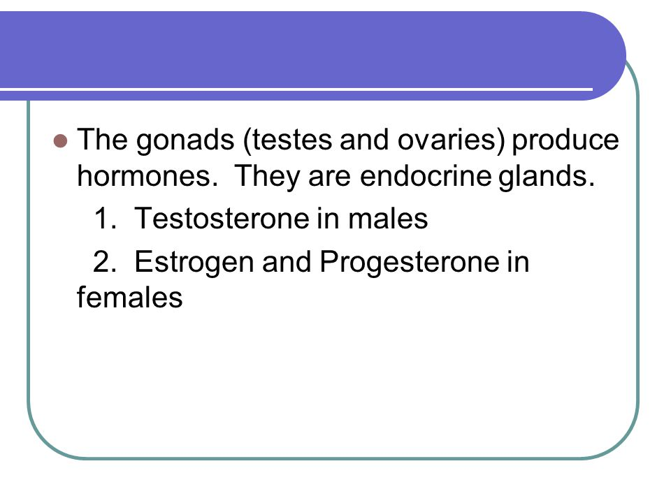 The gonads (testes and ovaries) produce hormones