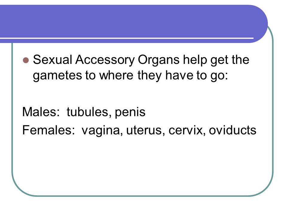 Sexual Accessory Organs help get the gametes to where they have to go: