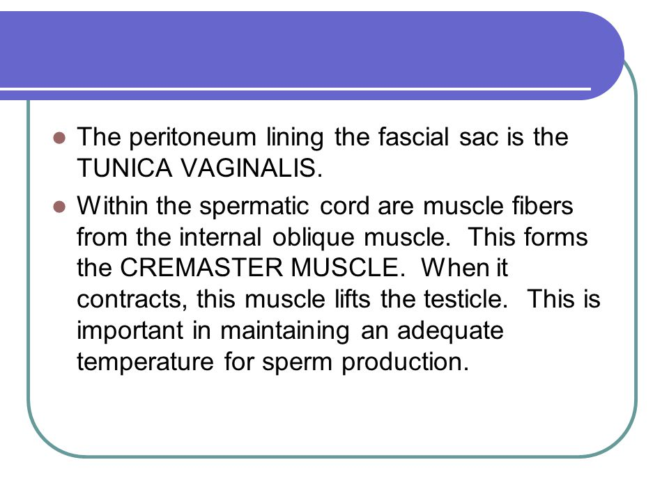 The peritoneum lining the fascial sac is the TUNICA VAGINALIS.