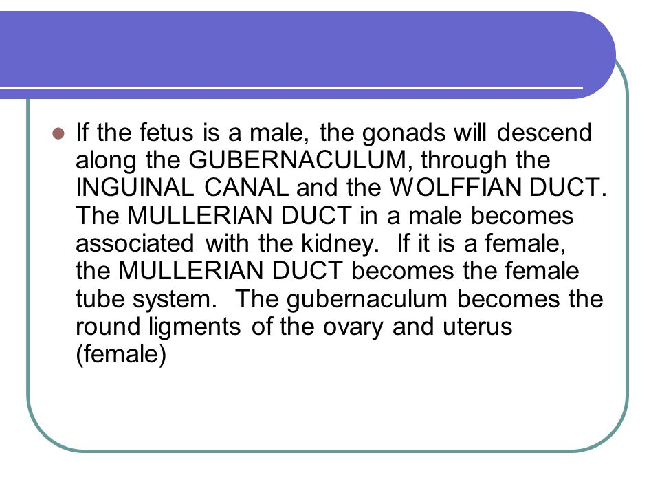 If the fetus is a male, the gonads will descend along the GUBERNACULUM, through the INGUINAL CANAL and the WOLFFIAN DUCT.