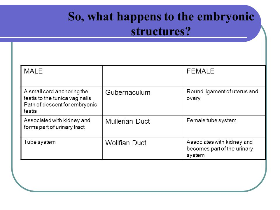 So, what happens to the embryonic structures