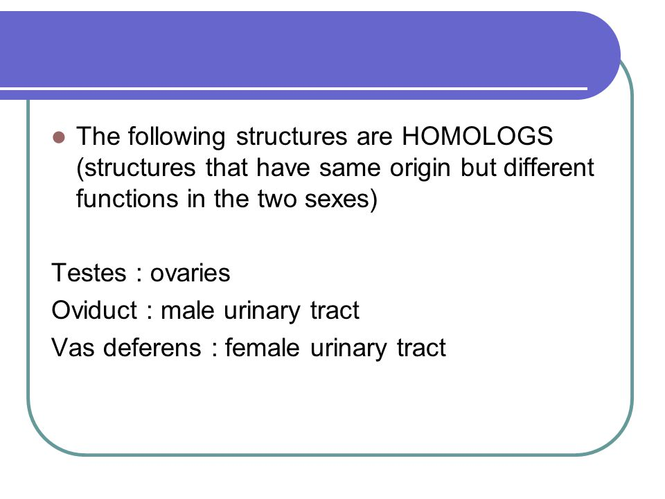 The following structures are HOMOLOGS (structures that have same origin but different functions in the two sexes)