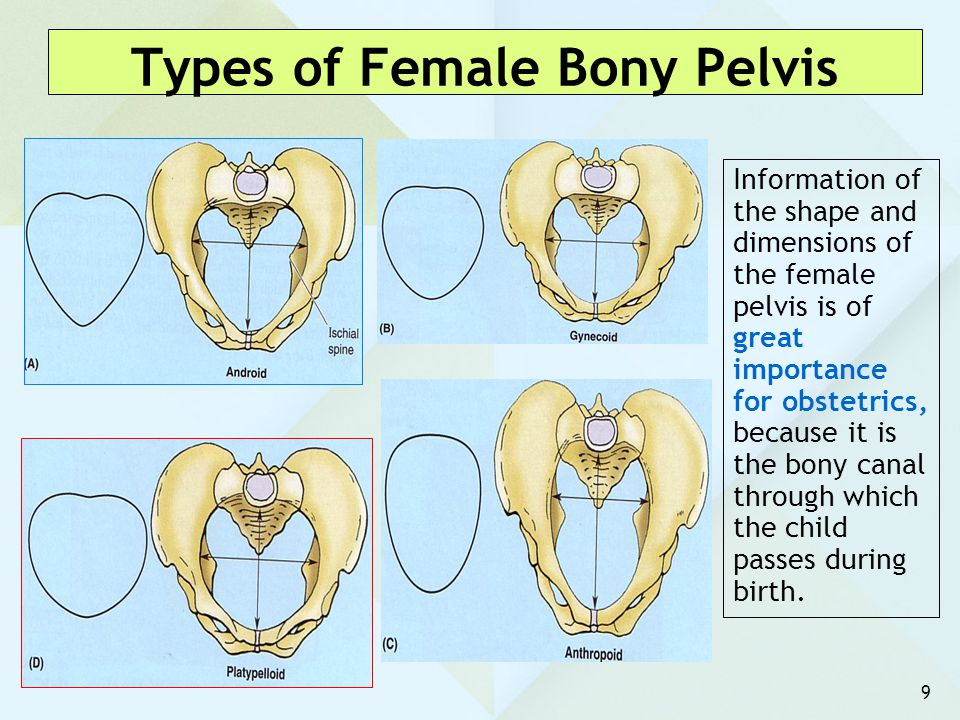 Types of Female Bony Pelvis