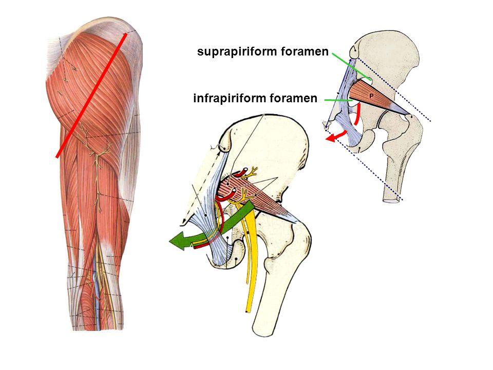 suprapiriform foramen