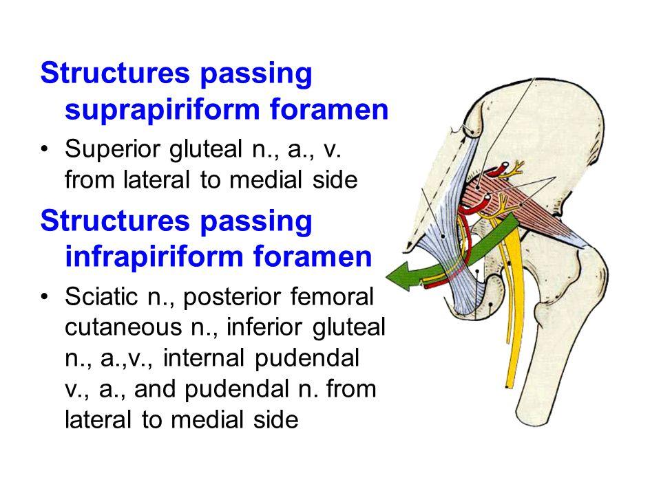 Structures passing suprapiriform foramen