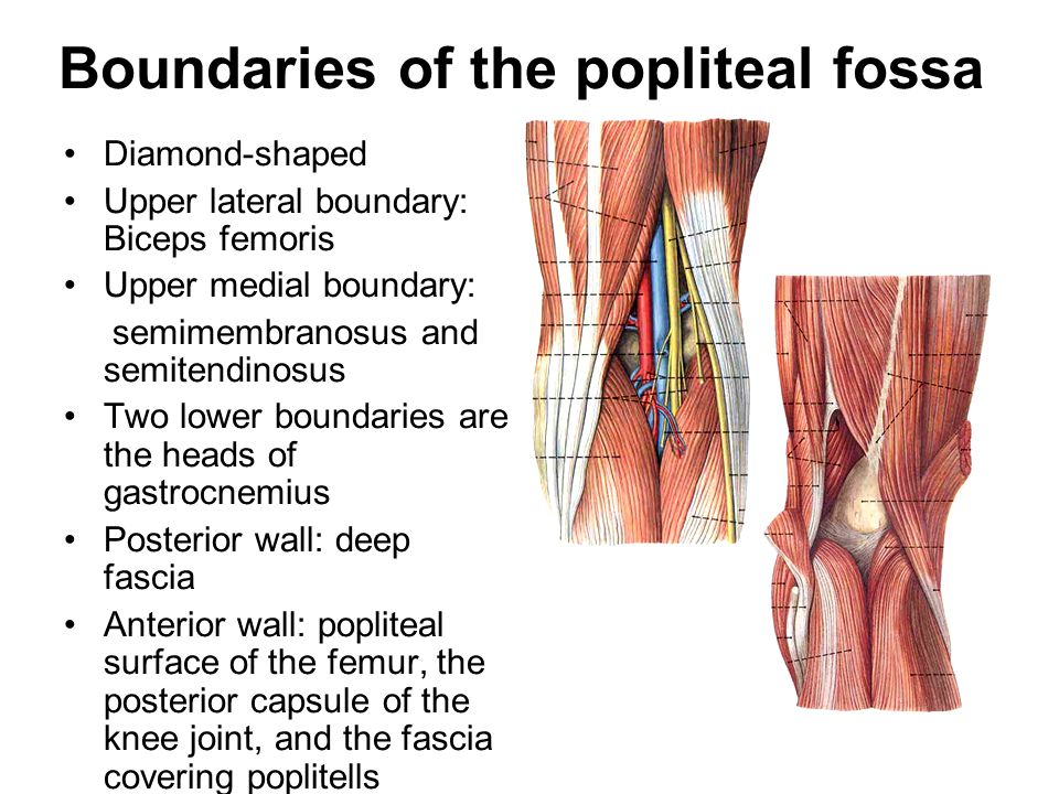 Boundaries of the popliteal fossa