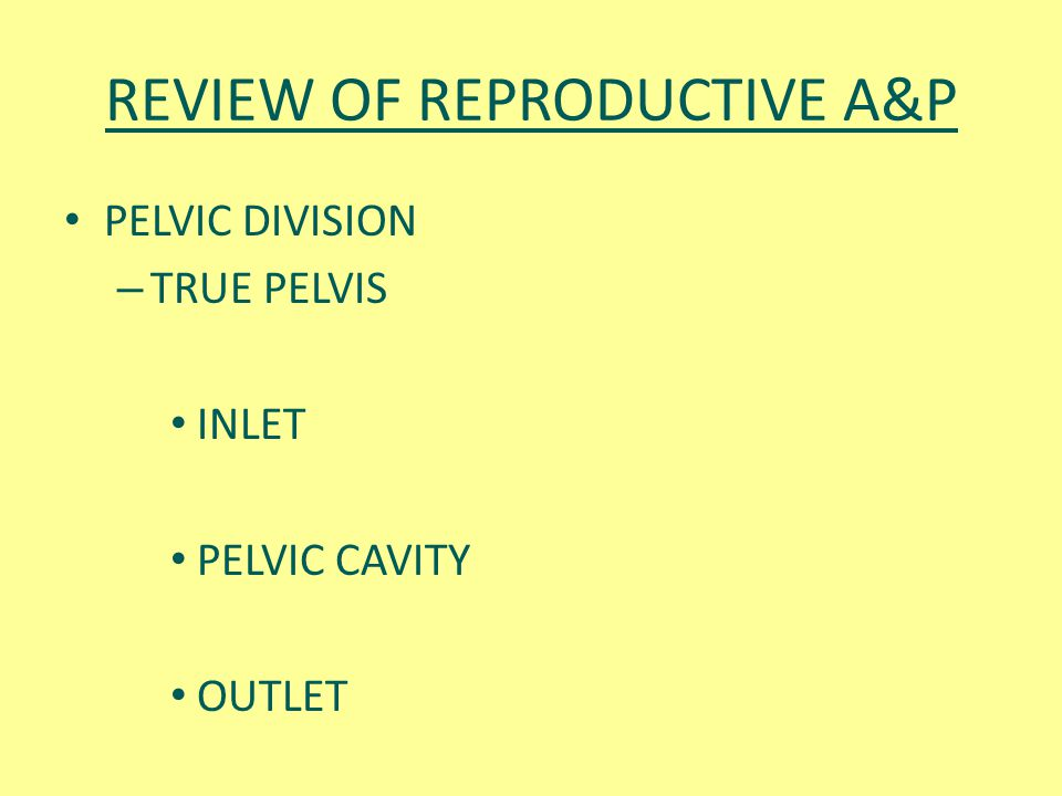 REVIEW OF REPRODUCTIVE A&P