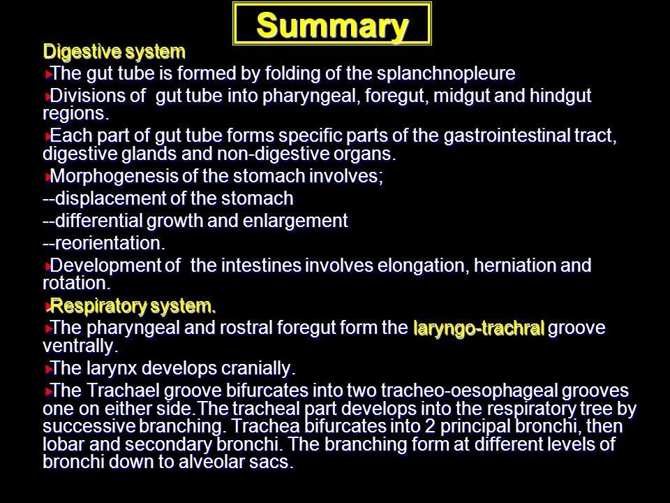 Summary Digestive system