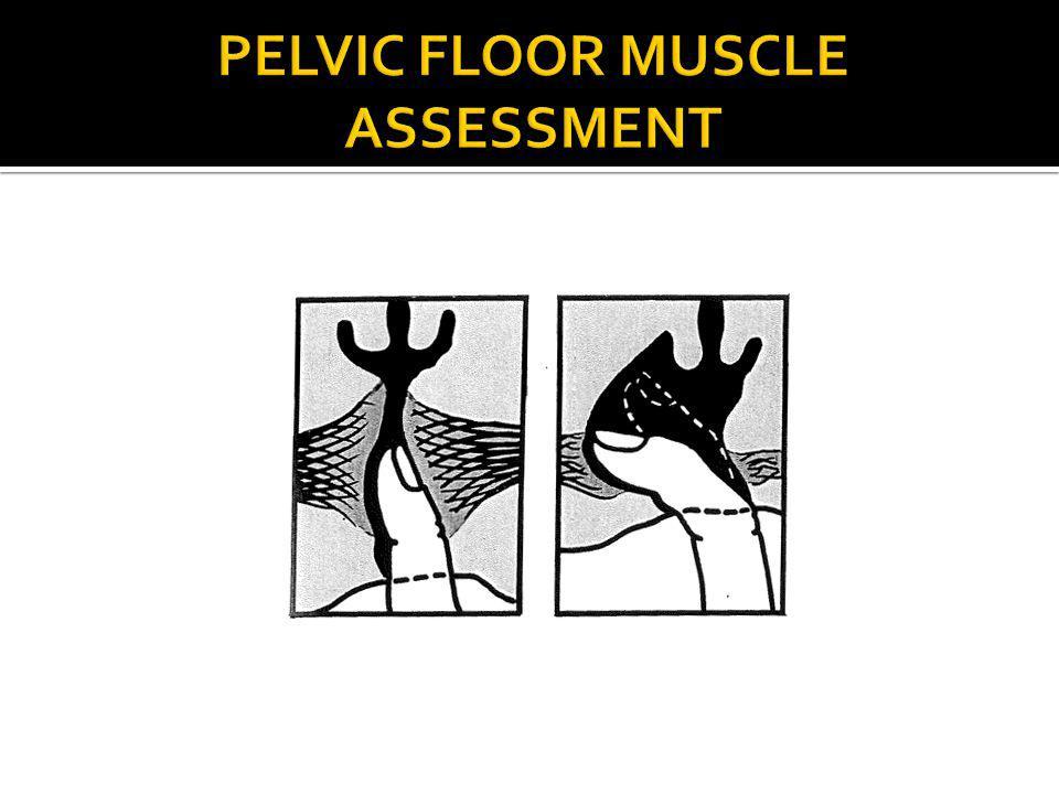PELVIC FLOOR MUSCLE ASSESSMENT
