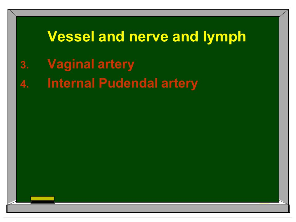 Vessel and nerve and lymph