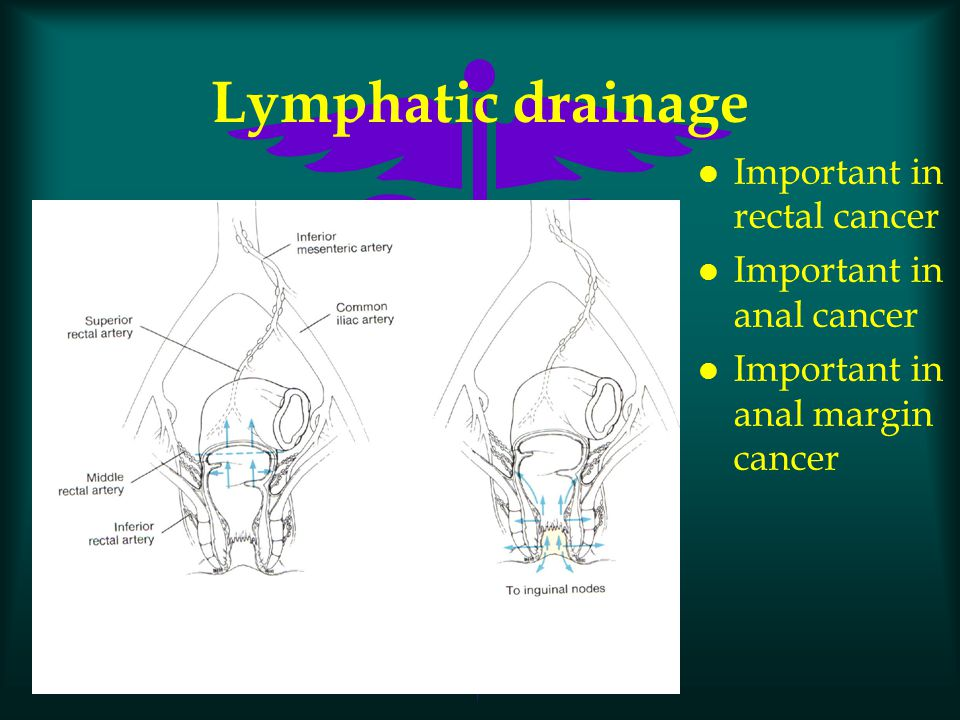 Lymphatic drainage Important in rectal cancer Important in anal cancer
