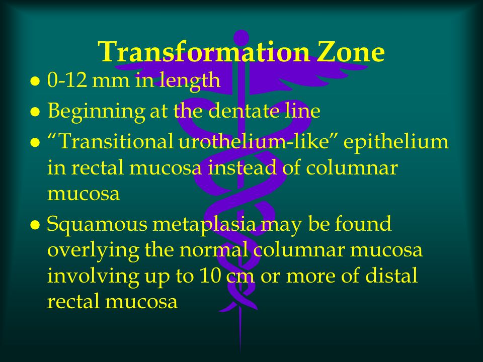 Transformation Zone 0-12 mm in length Beginning at the dentate line