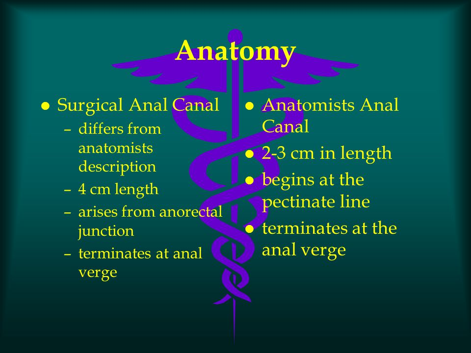 Anatomy Surgical Anal Canal Anatomists Anal Canal 2-3 cm in length