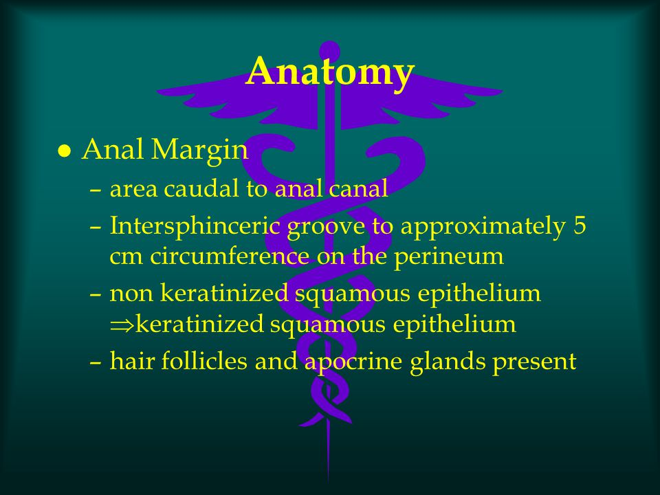 Anatomy Anal Margin area caudal to anal canal