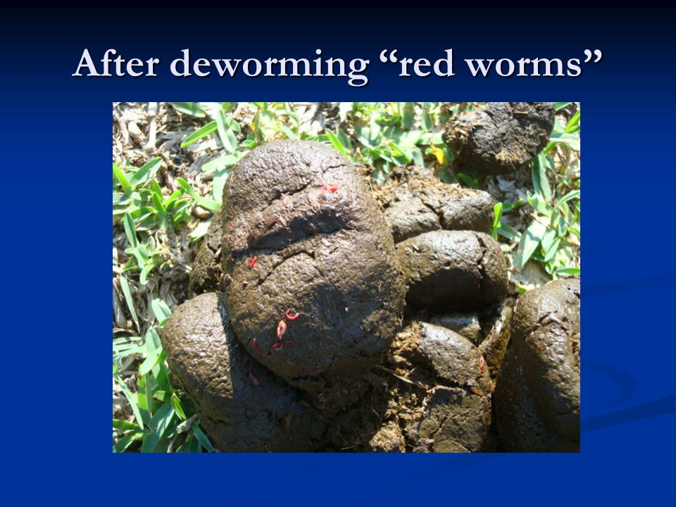 After deworming red worms