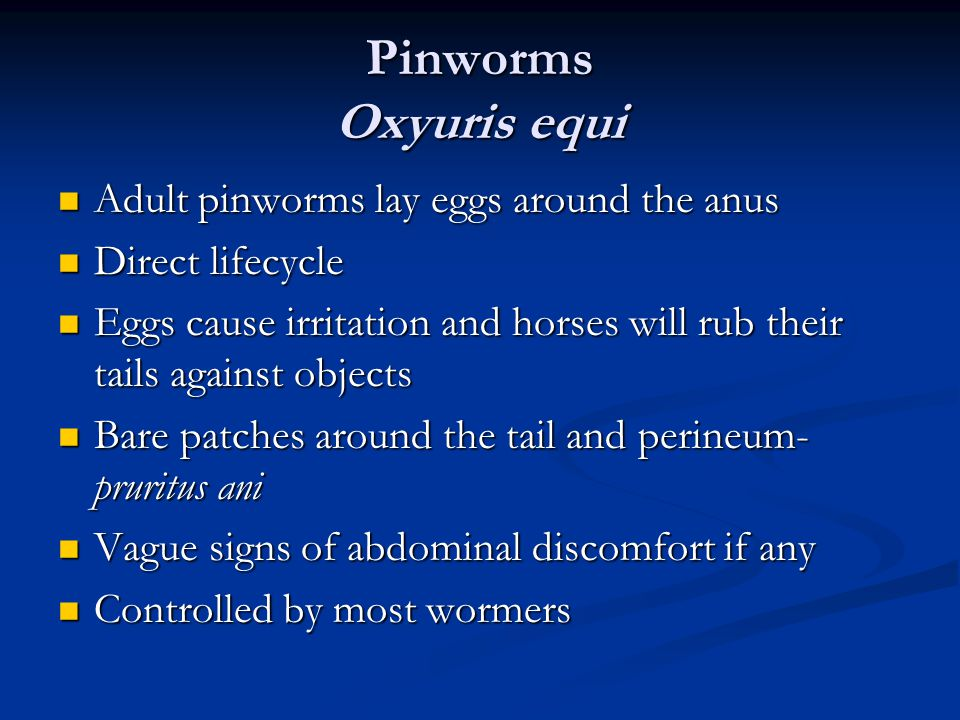 Pinworms Oxyuris equi Adult pinworms lay eggs around the anus