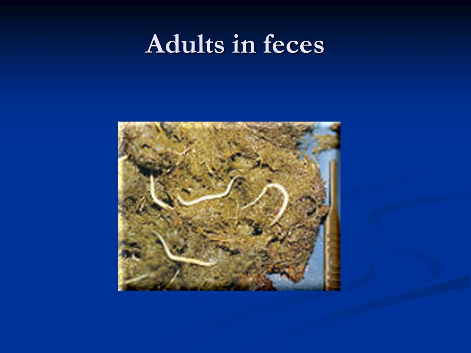 Adults in feces