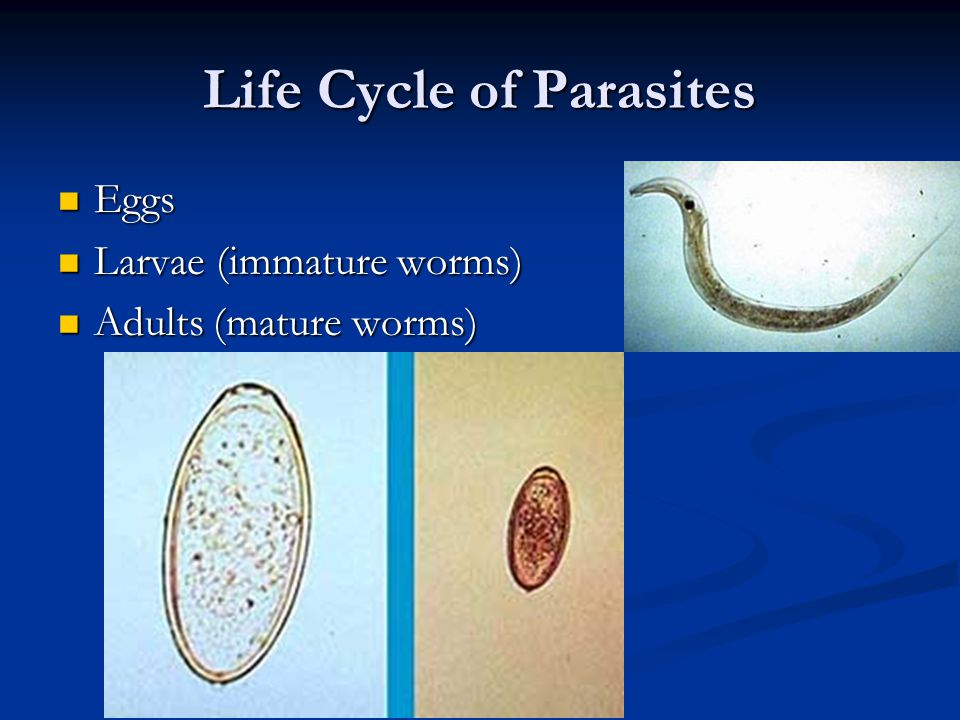 Life Cycle of Parasites